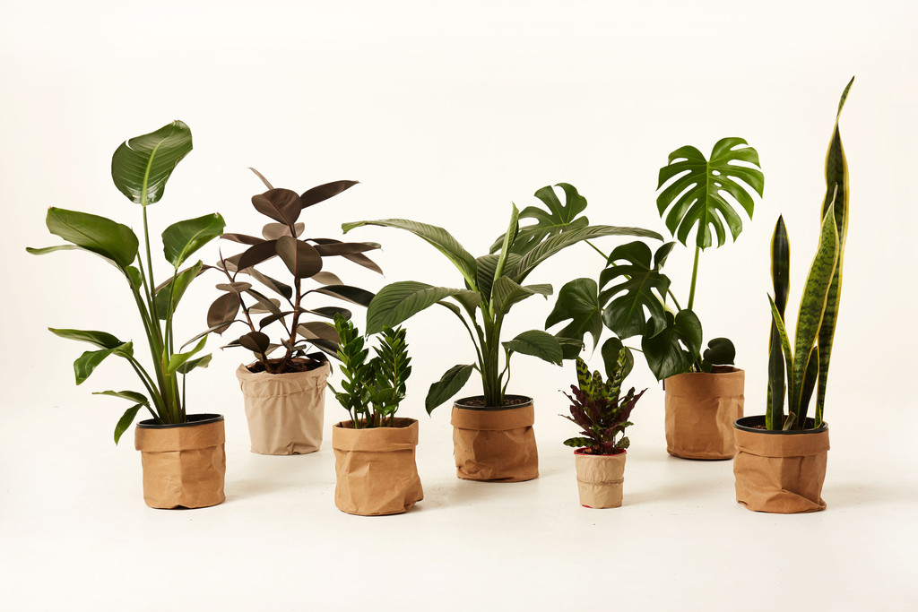 jumanji plant curation service