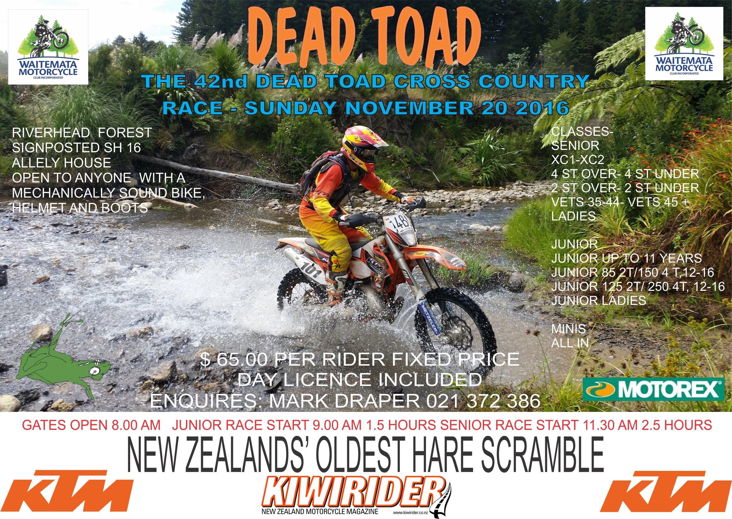toad16.jpg