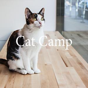 CatCamp.png