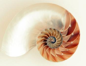 Nautilus Shell. Image Source - Pexels.com