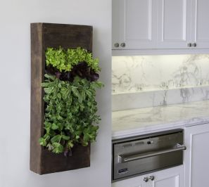"""Sustain.herb.wall. AKA """"sustainable"""". Grow your own. Image source homedit.com"""