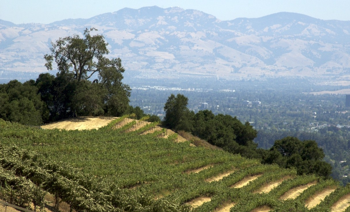 Copy of Lone Oak Vineyard