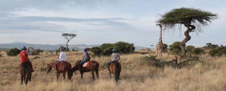 Horses and giraffe for web.jpg