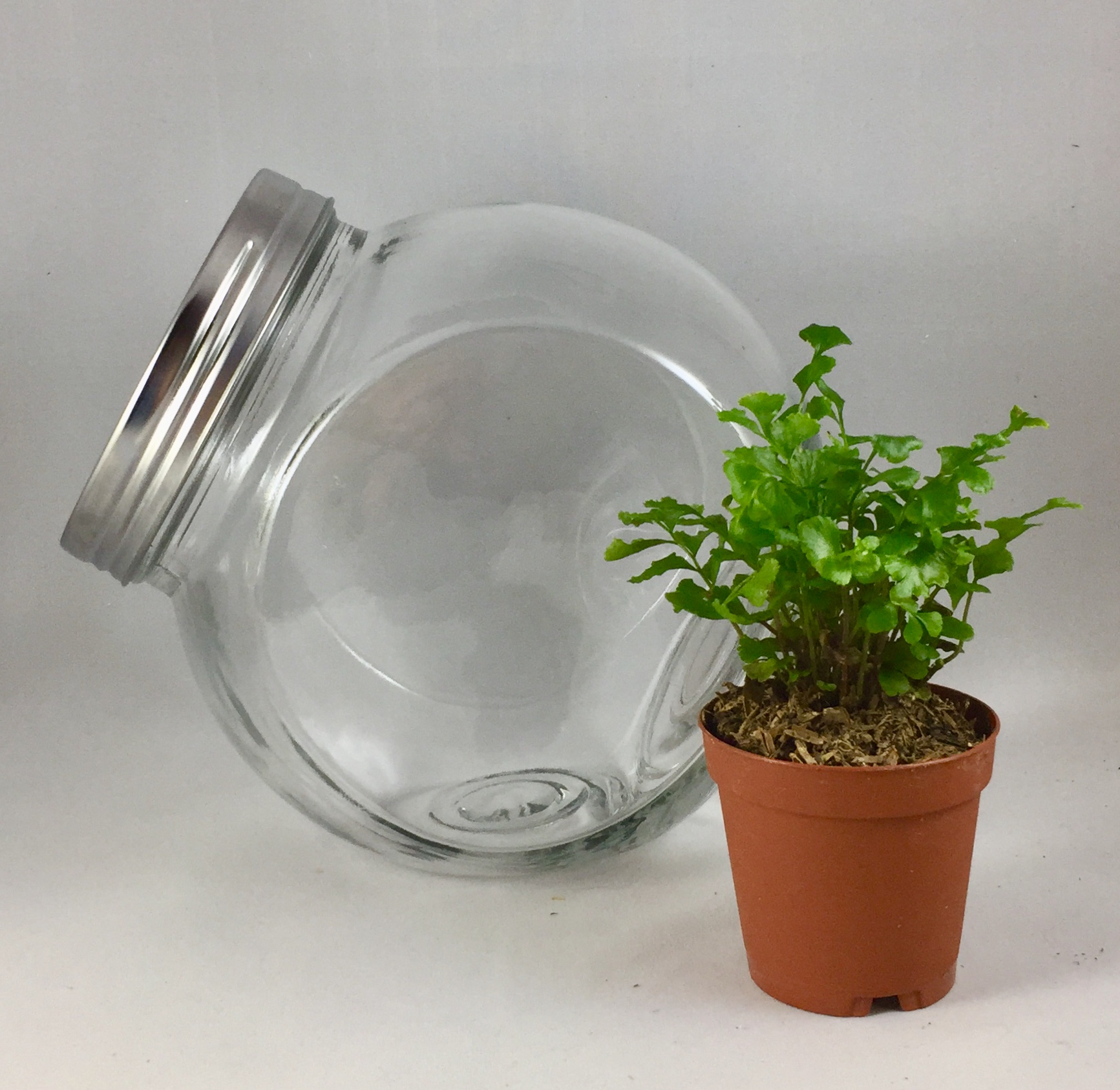 Small Tilted Terrarium - $20 includes: 6 inch round jar, one plant, base sands, dirt, decorations and tote bag.