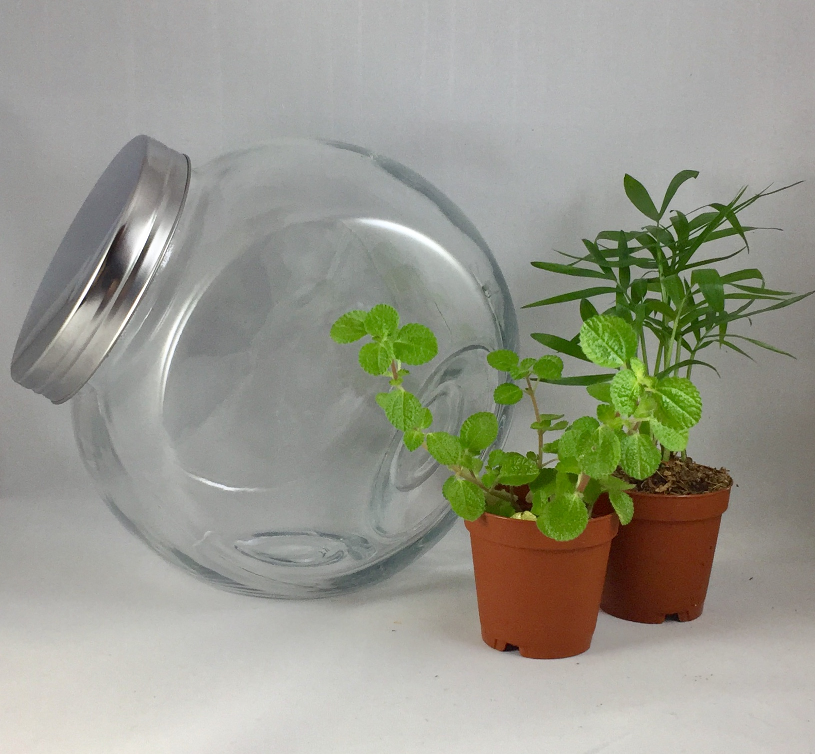 Medium Tilted Terrarium - $30 includes: 7 1/2 inch round jar, two plants, base sands, dirt, decorations and tote bag.