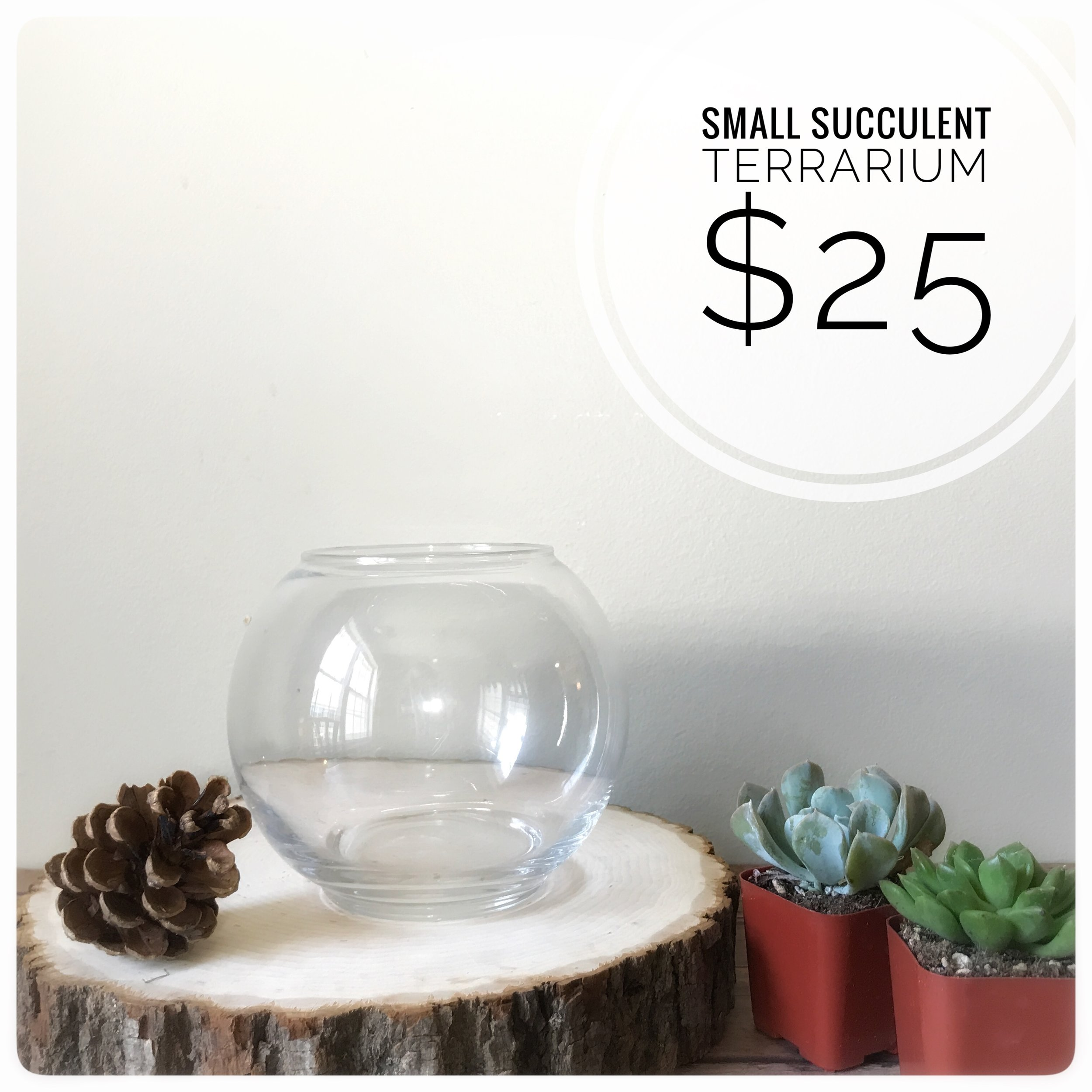 Includes two succulents