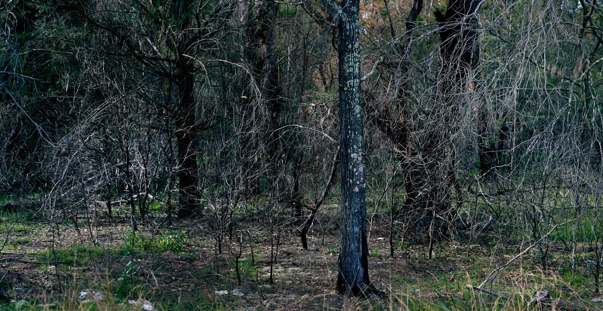 Inland02, Bargo NSW 2013