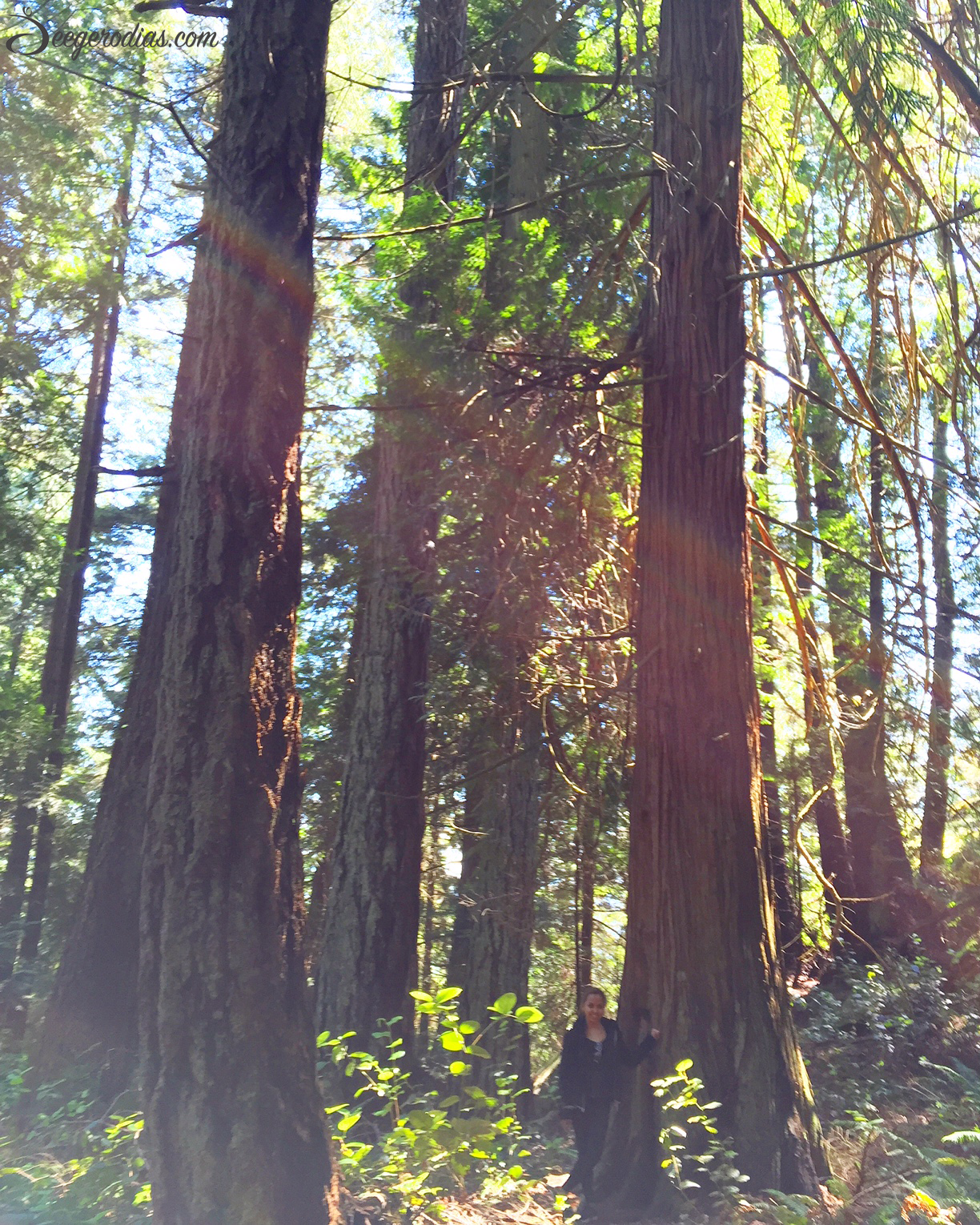 Vancouver rainforest.  Hiking is a great way to appreciate nature, unwind and still keep that body moving! Two awesome hiking spots we went to: Capilano Suspension Bridge and Lighthouse Park.