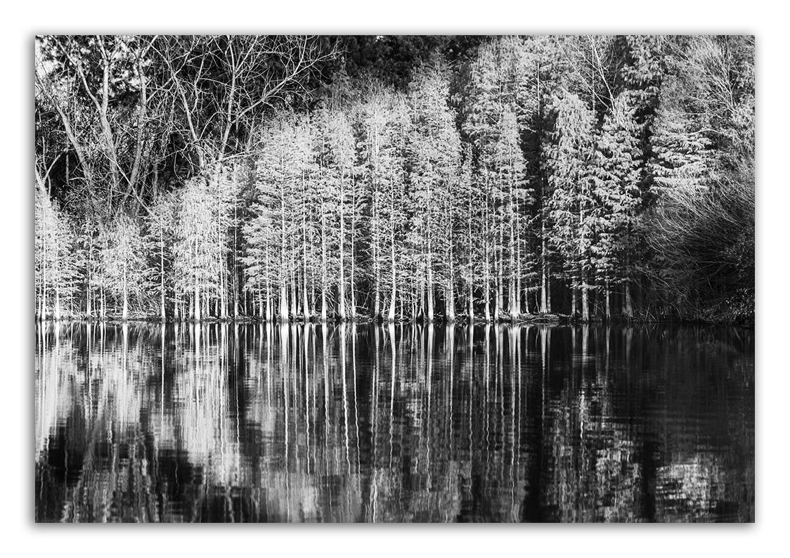 波形,水杉,植物园。