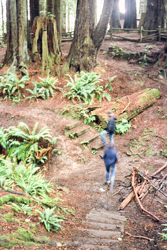 redwoods-11.jpg