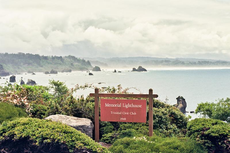 redwoods-27.jpg