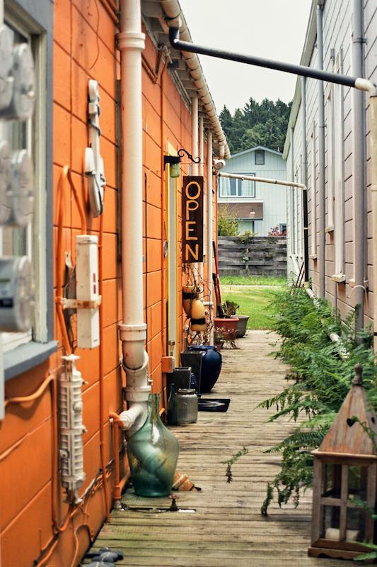 redwoods-30.jpg