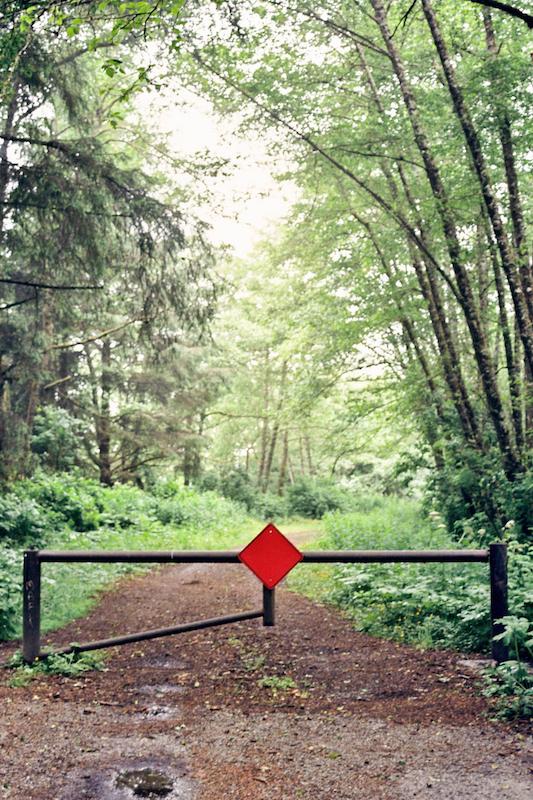 redwoods-37.jpg