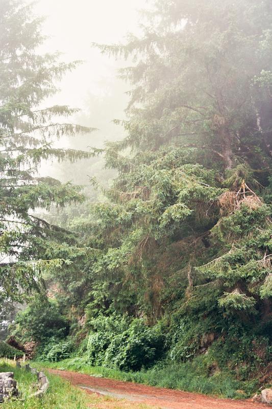 redwoods-39.jpg
