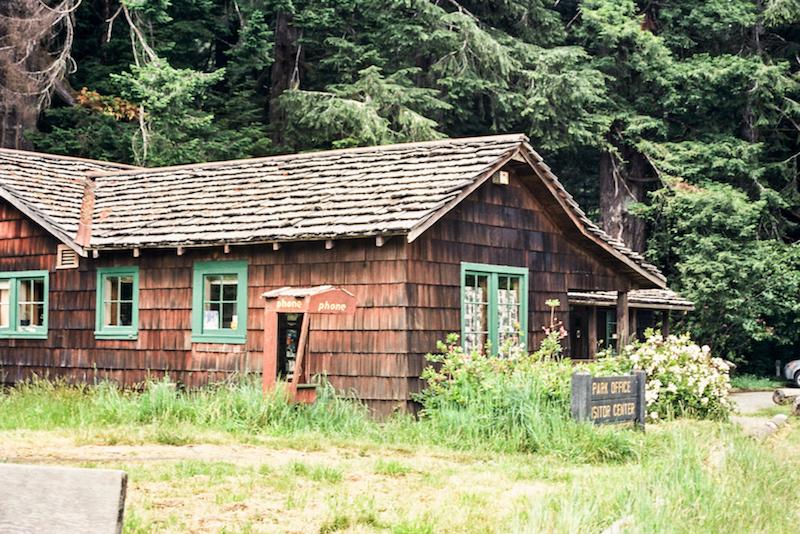 redwoods-40.jpg