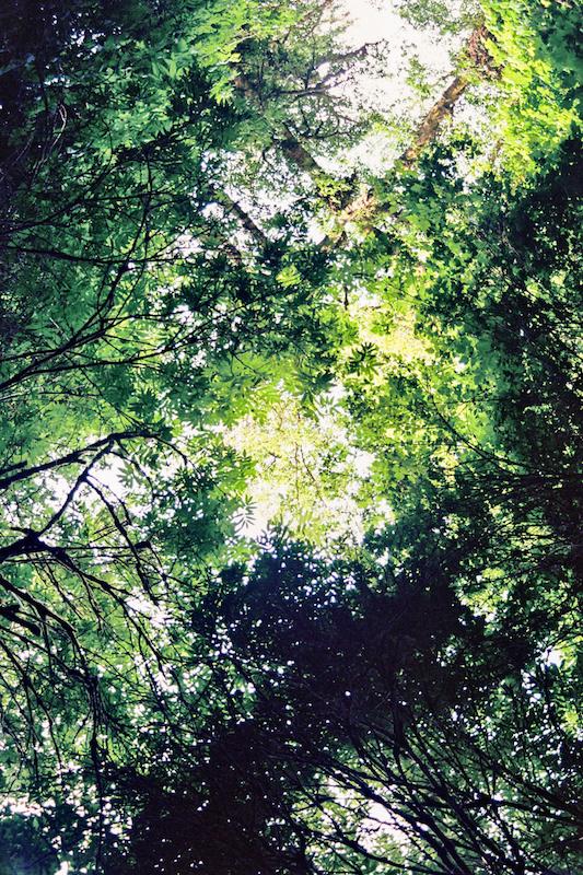 redwoods-45.jpg