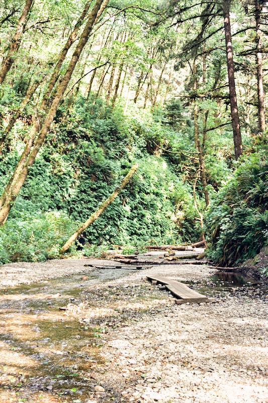 redwoods-43.jpg