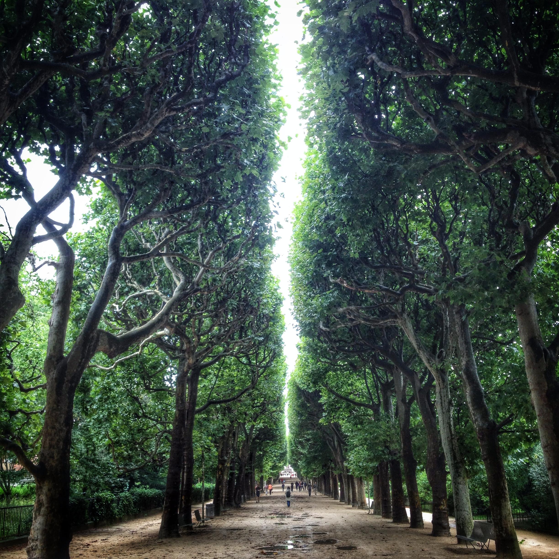 Paris_treeline.jpg