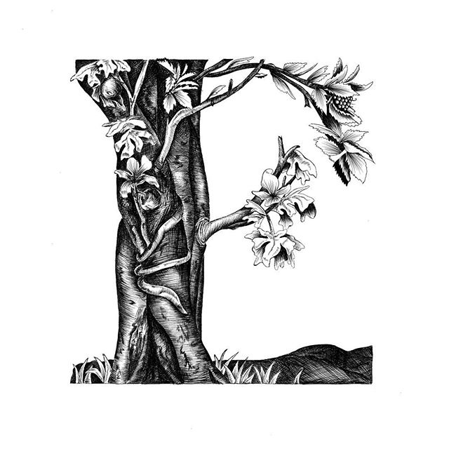 E for Engraving | Inspired by Albrecht Dürer | #36daysoftype 🌟 It took me only an extra 74939363 hours of hatching and cross hatching, but I made it!  Fun fact- One of the most common scenes to depict in the 1500s was that of Adam and Eve in the Garden of Eden. The Fall of Man is one of Dürer's most famous engravings and my personal favorite. This is my interpretation of it, with the soft and hard leaves representing the female and male characters. . @36daysoftype #36days_E #typography #type #graphicdesign #design #art #ipad #adobe #illustration #procreate #sambaliga #sambaligaportfolio #engraving