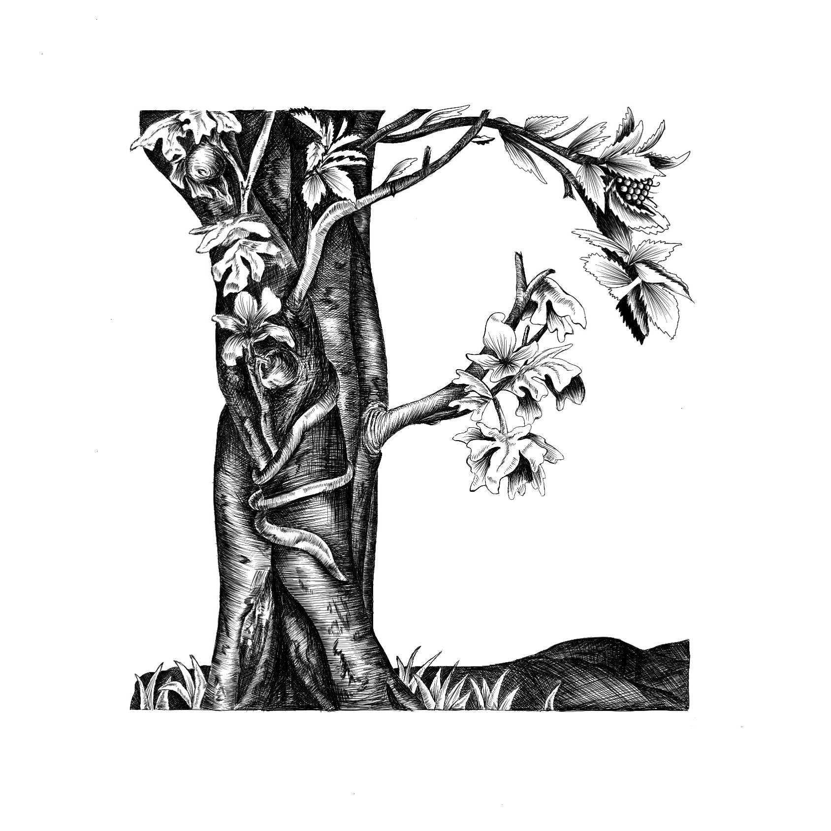 E for Engraving | Inspired by Albrecht Dürer |  #36daysoftype  🌟 It took me only an extra 74939363 hours of hatching and cross hatching, but I made it!  Fun fact- One of the most common scenes to depict in the 1500s was that of Adam and Eve in the Garden of Eden. The Fall of Man is one of Dürer's most famous engravings and my personal favorite. This is my interpretation of it, with the soft and hard leaves representing the female and male characters.