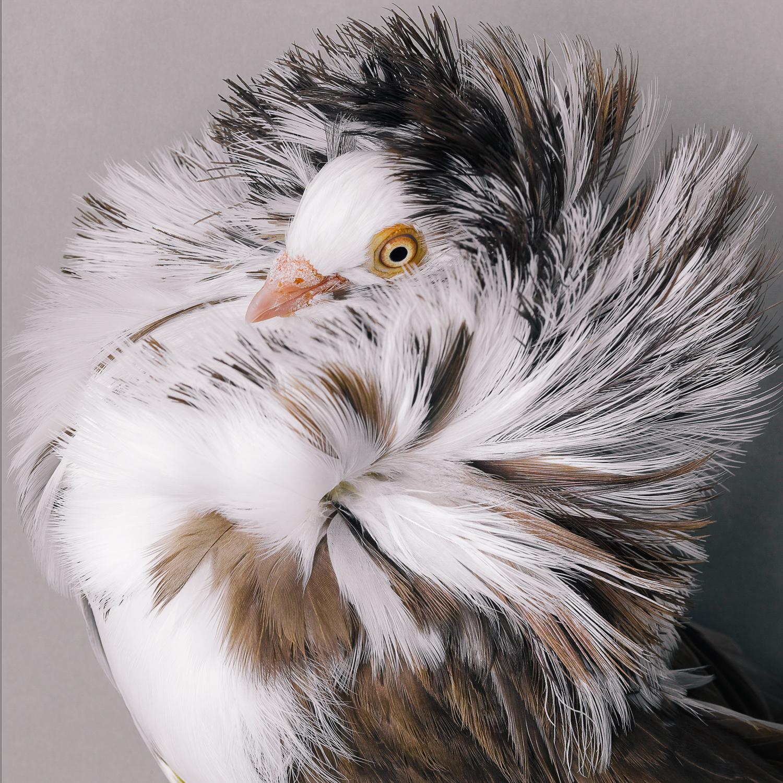 pigeon _00143.jpg