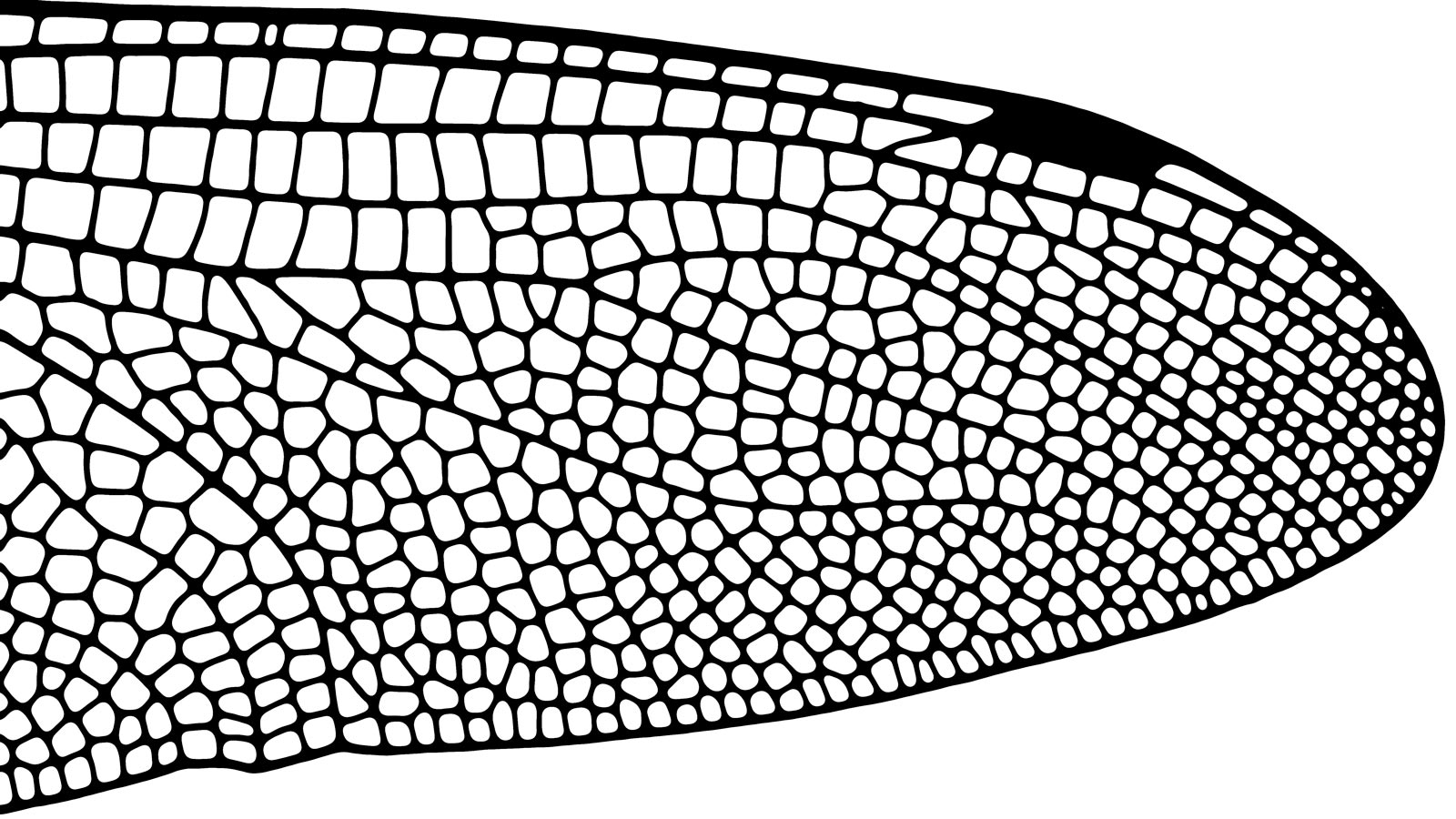 insect-wing-structure.jpg