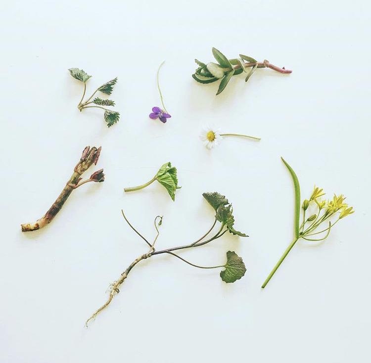 Åtta vanliga vilda växter