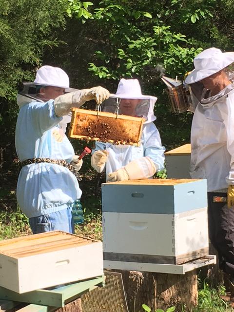 Bees at Blue Doors