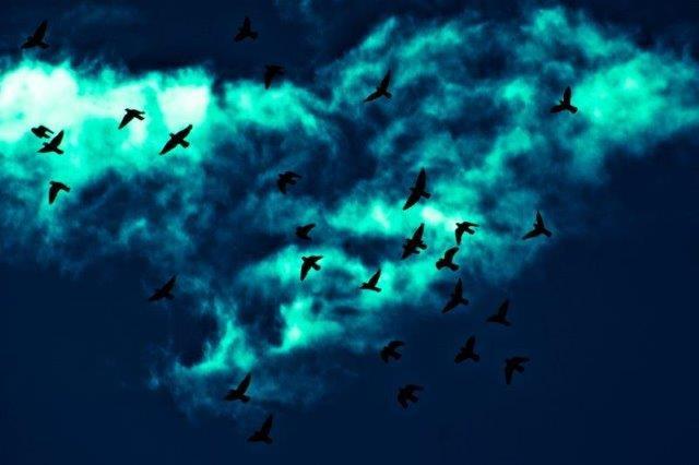Birds fr RM.jpg