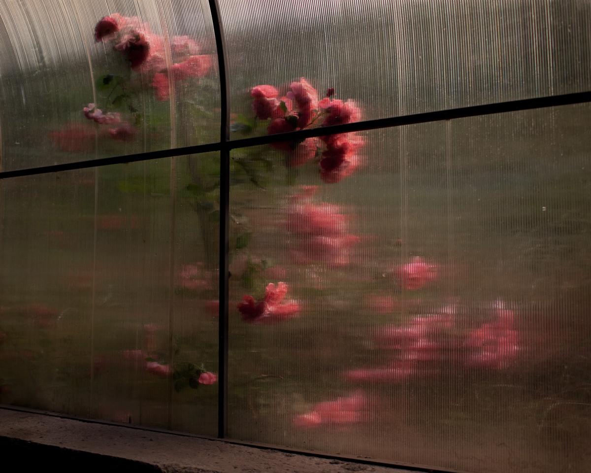 Roses20.jpg