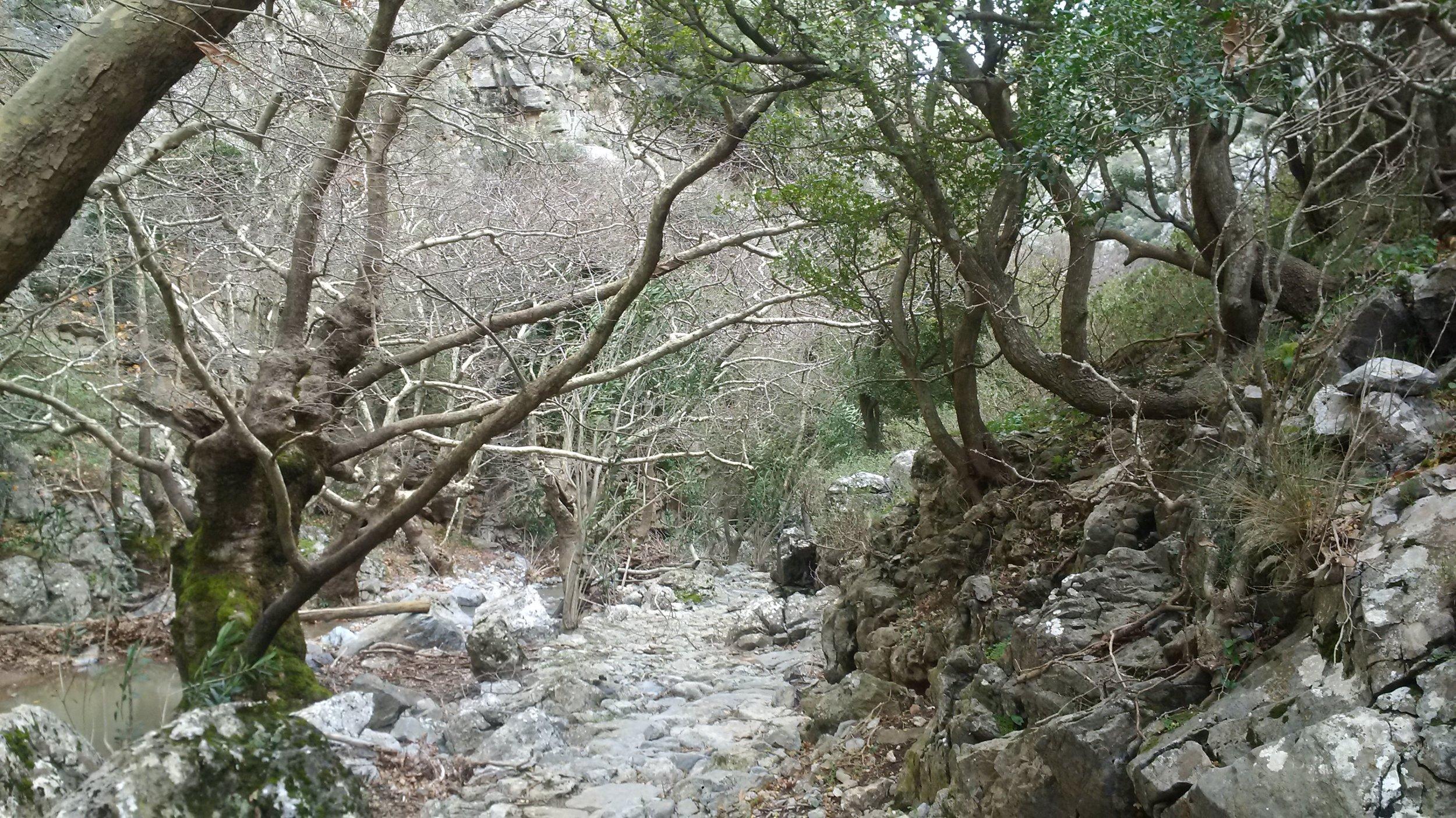 Creek bed near Moundas, Crete