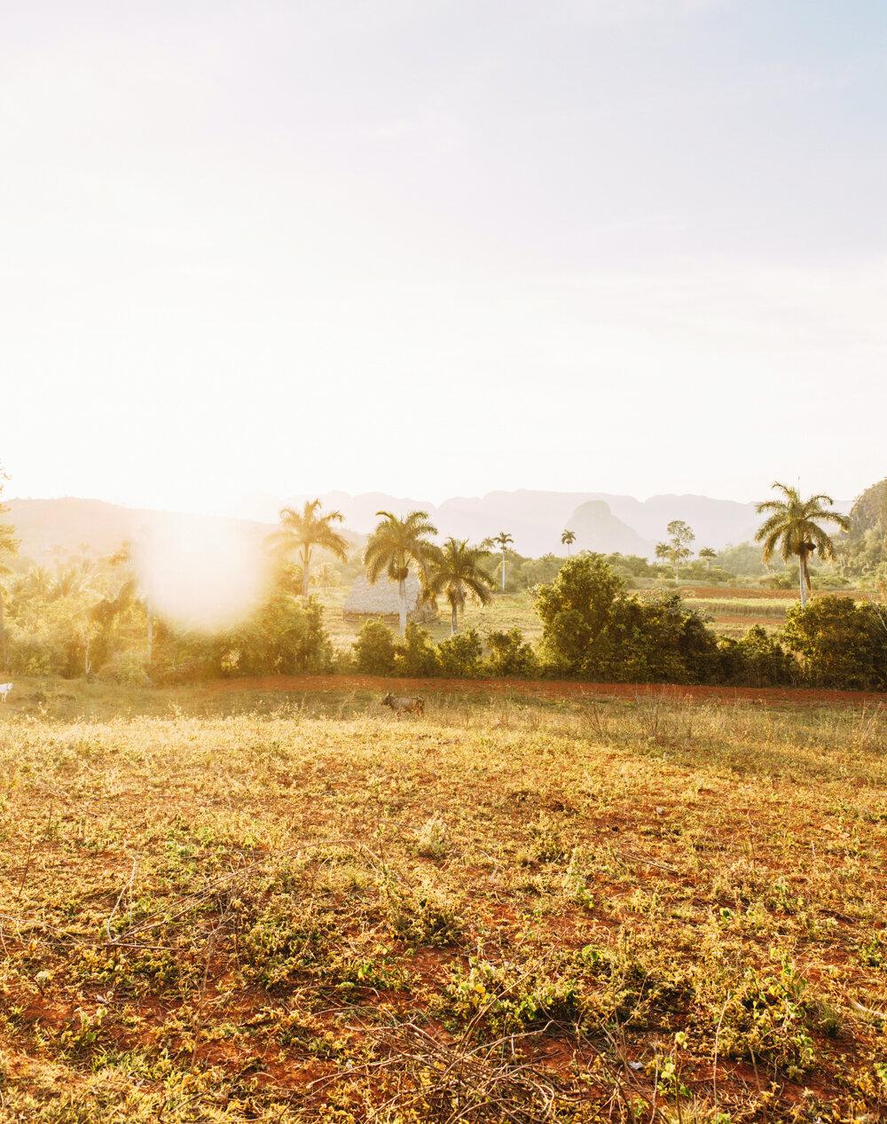 Travel | Cuba   For Libelle Magazine.