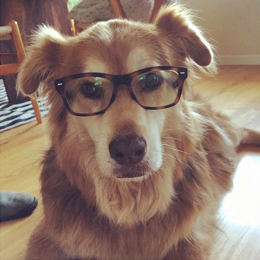 Poncho.glasses.jpg