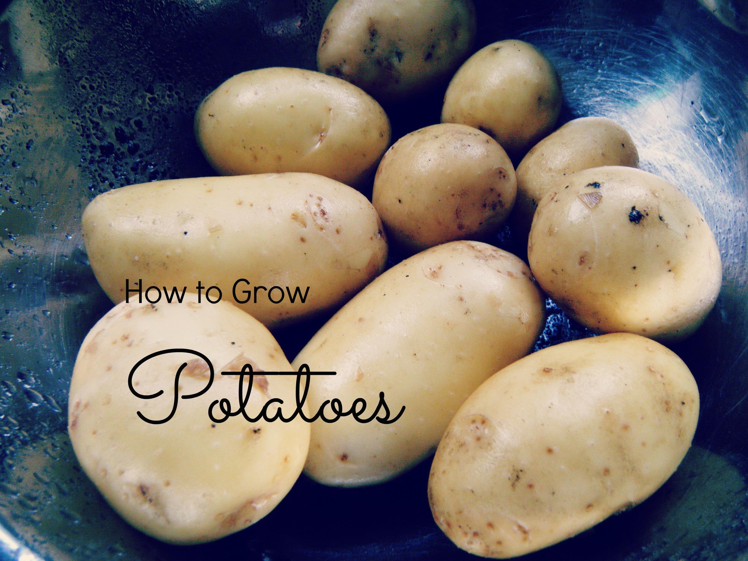 howtogrowpotatoes