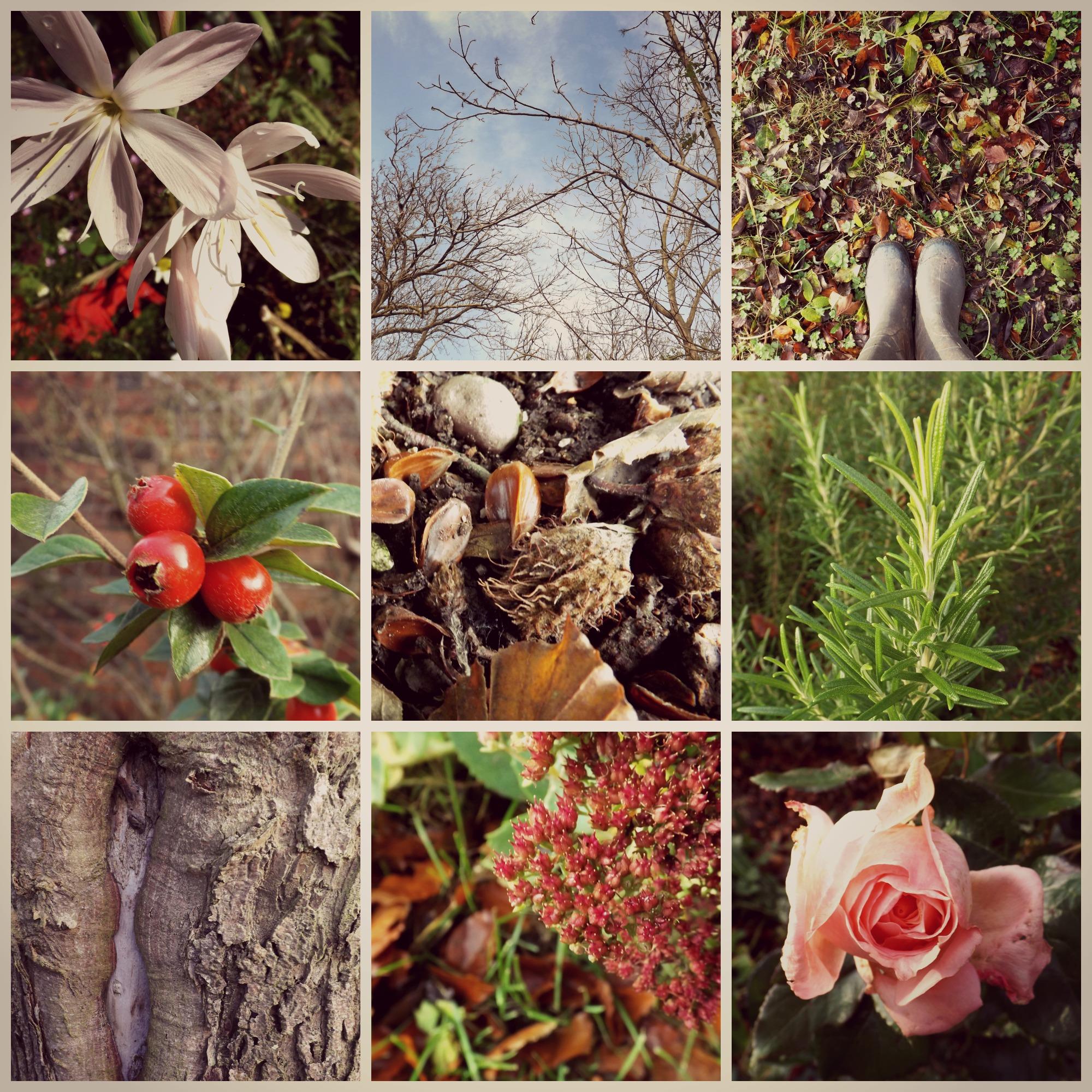 Autumn-Garden-Creative-Countryside