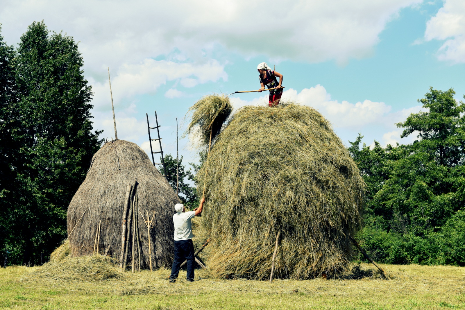 making a haystack.JPG