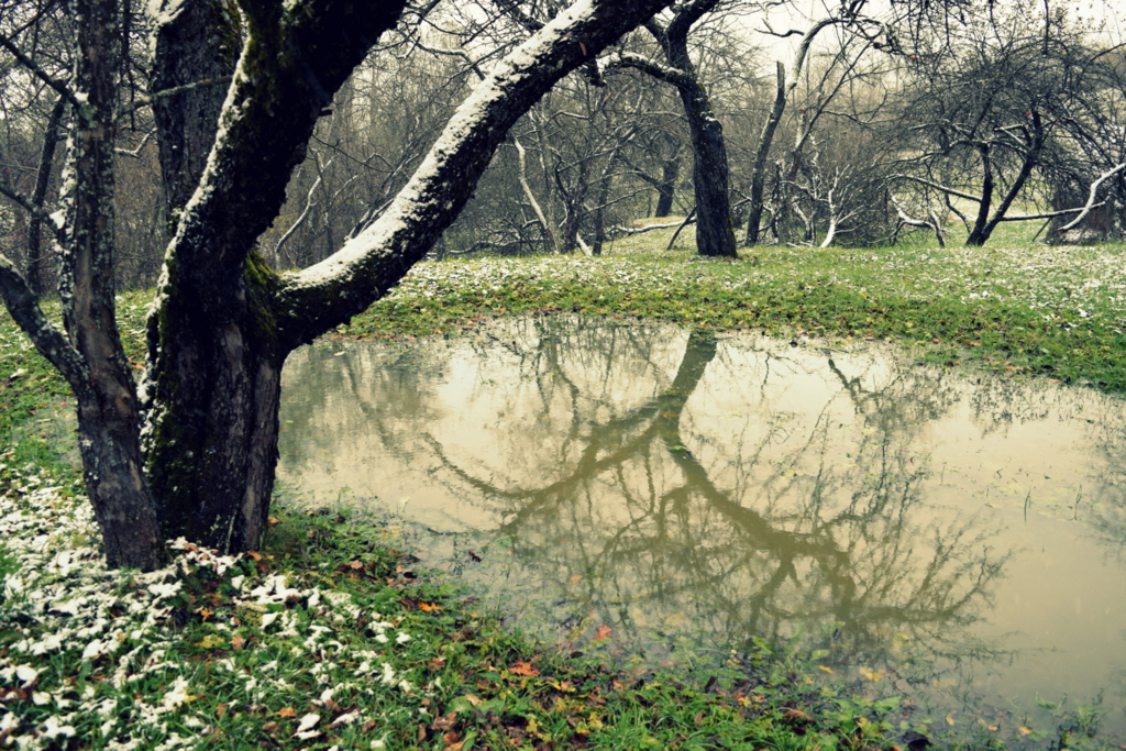 frosty fall morning.JPG