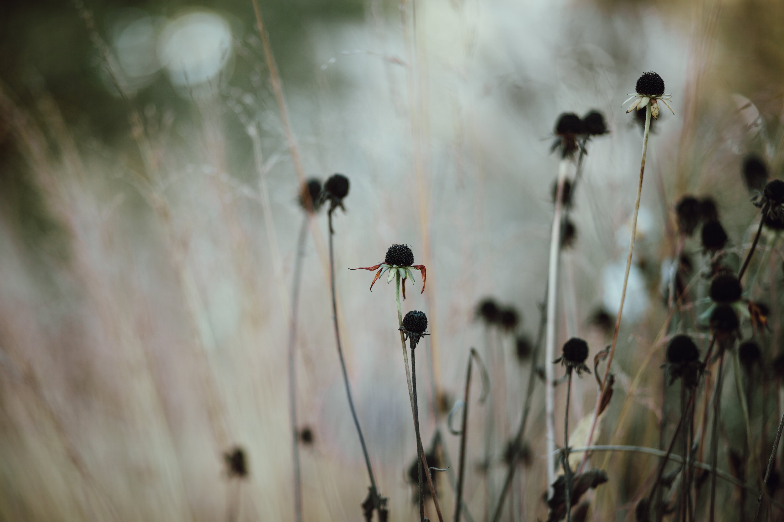 deadflowers.jpg