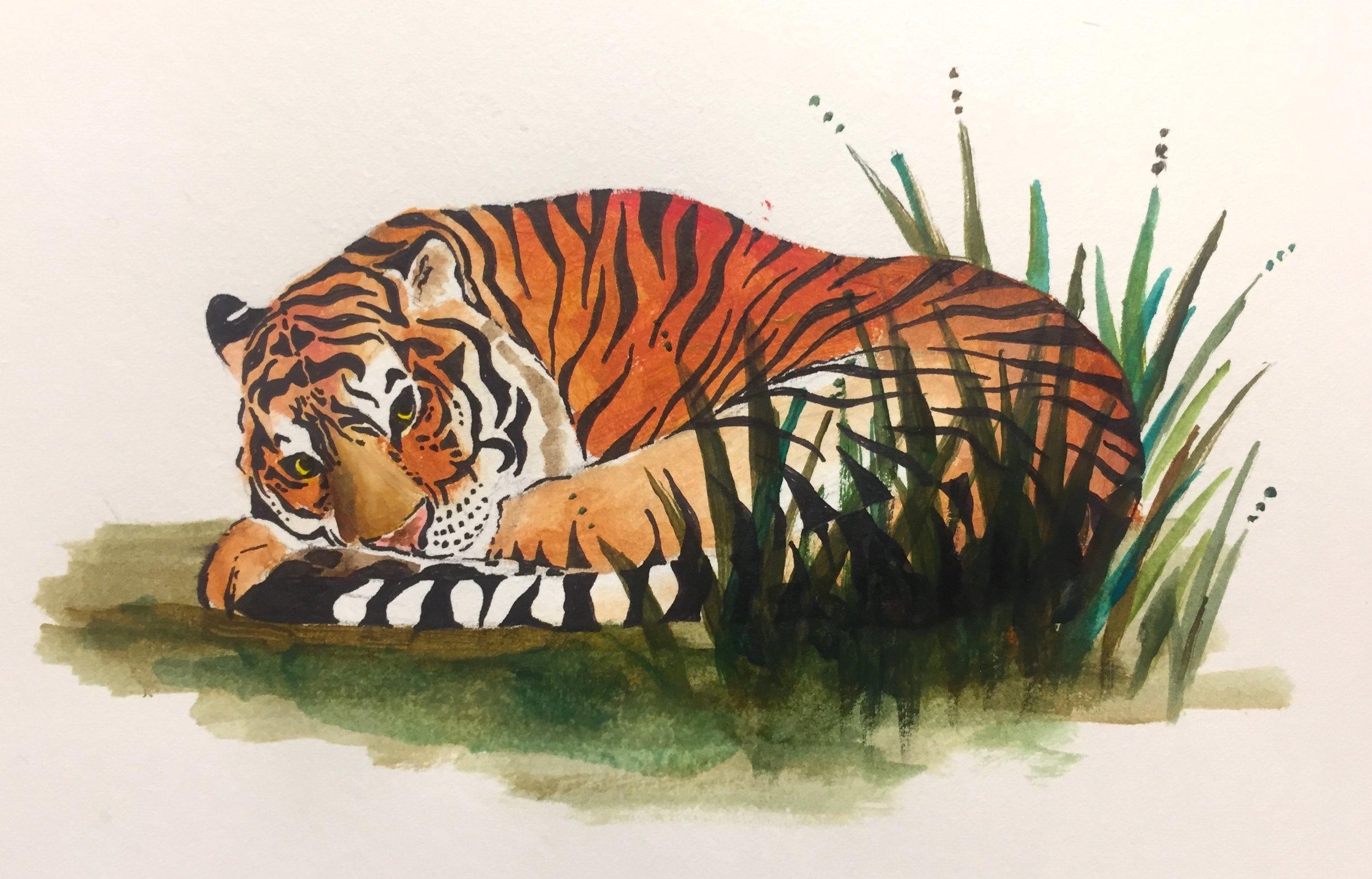 Tiger Snoozing.JPG