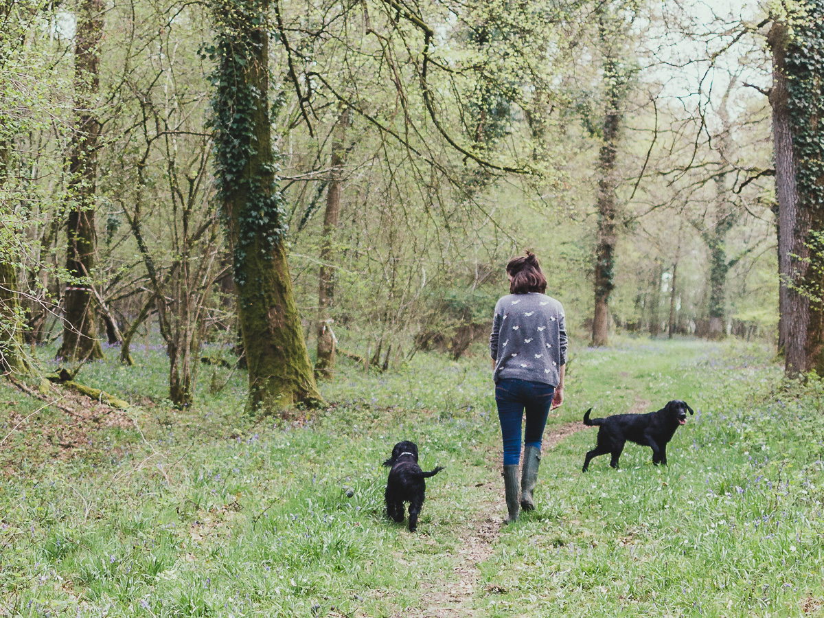 Walking the dogs in mottisfont woods - Josephine Penelope (3 of 3).jpg