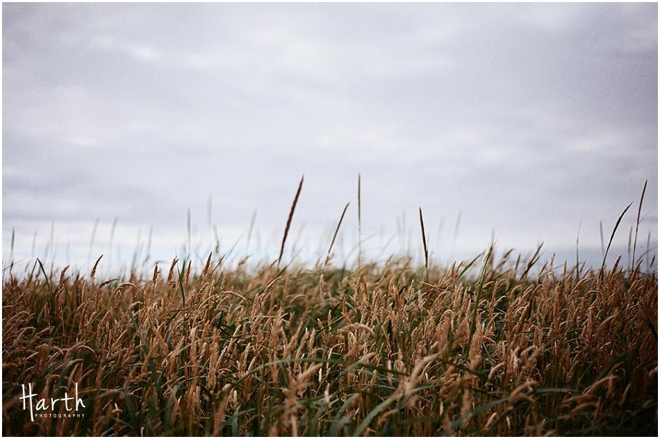 Westport, Washington Tall Grass
