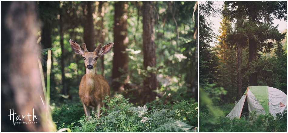 Deer and Tents - Harth Photography
