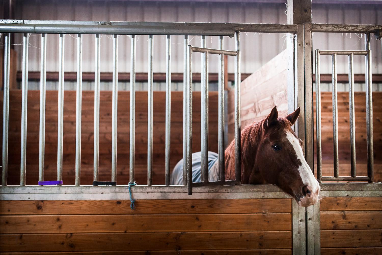 Washington Horse Riders