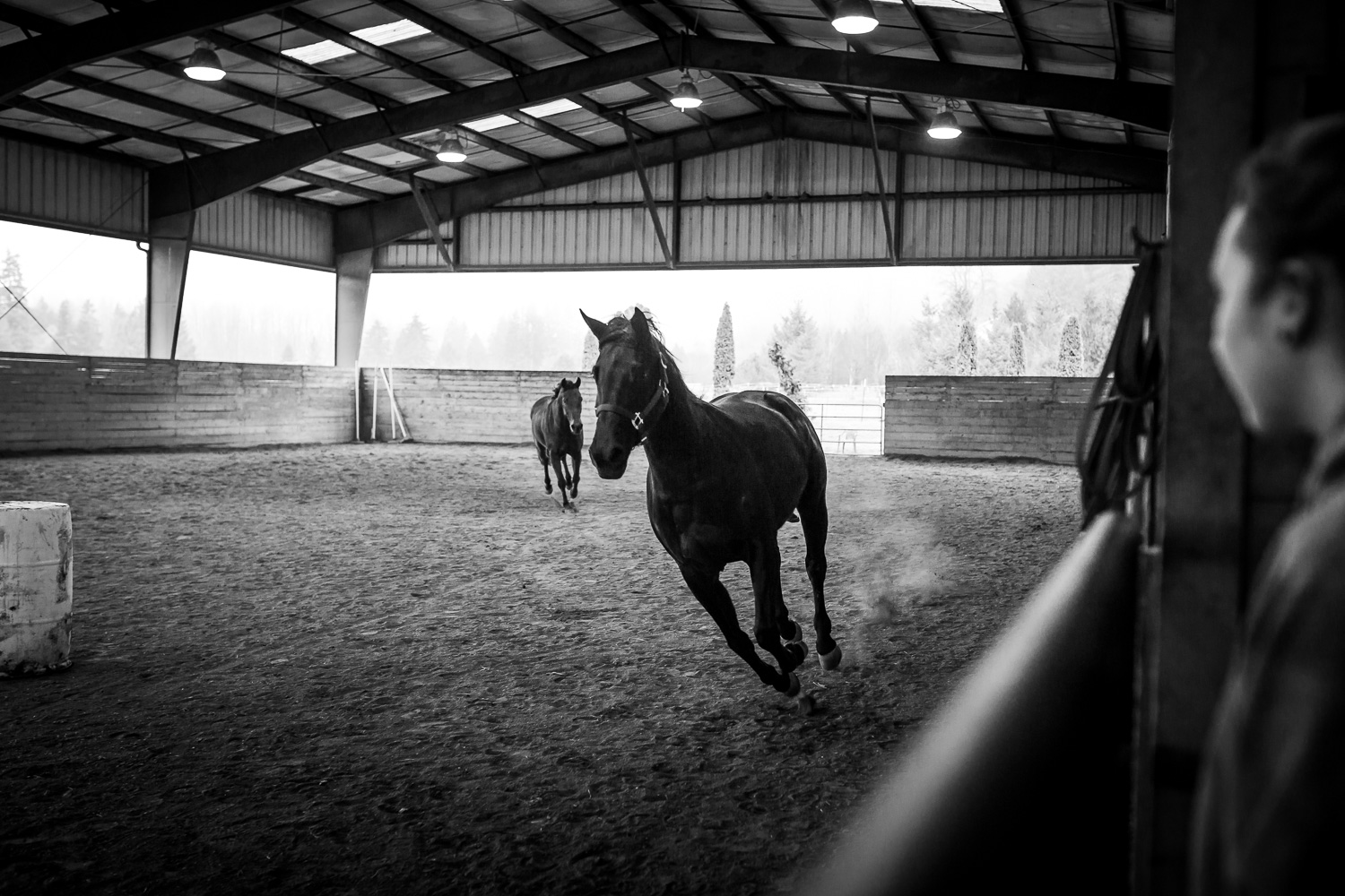 Horse Boarding and Training