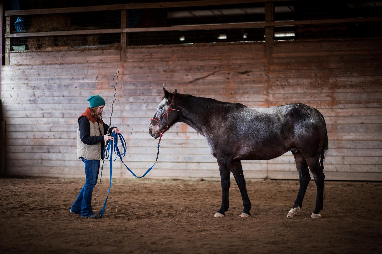 Washington Horse Trainer