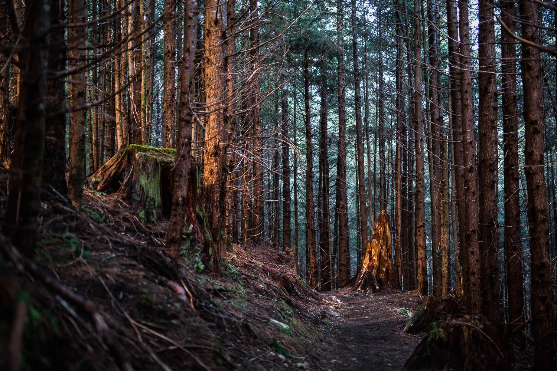Washington Trails Association - North Cascades