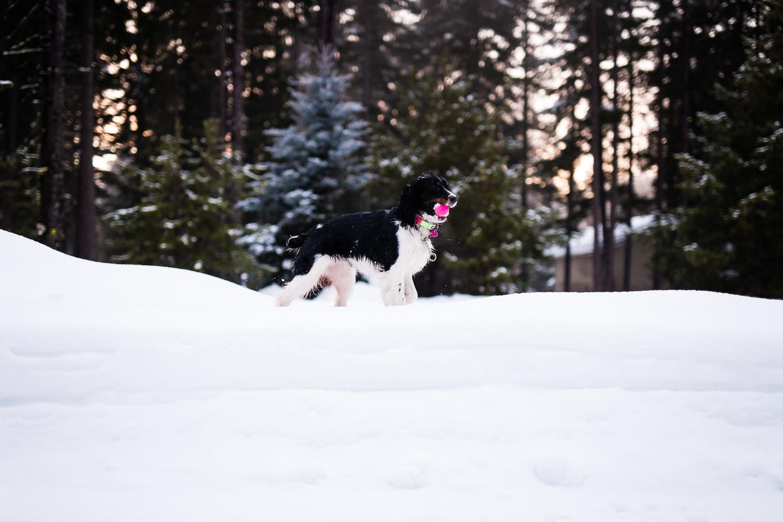 snoqualmie-winter-wedding-engagement-113.jpg
