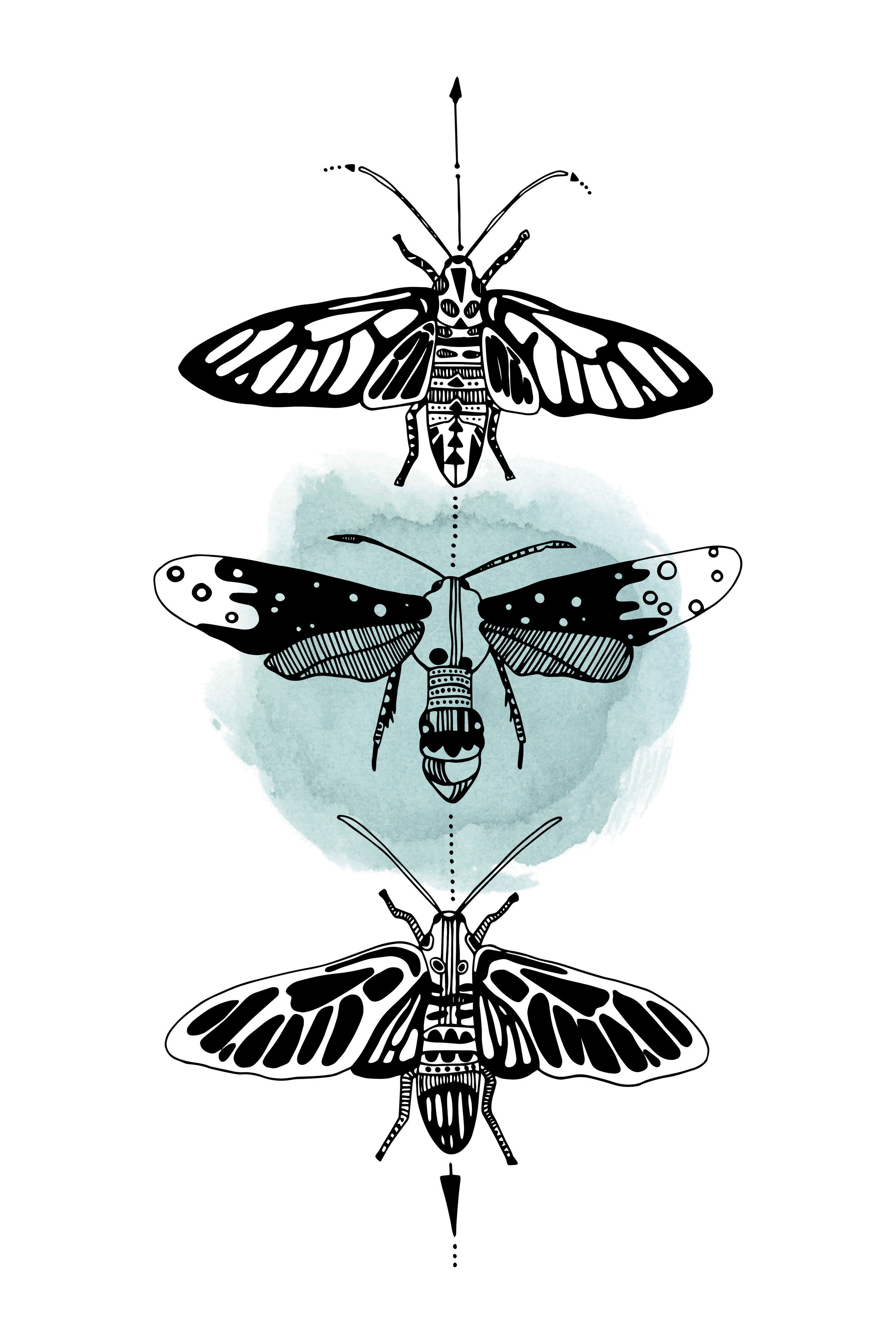 Wasp Moths 2-3.jpg