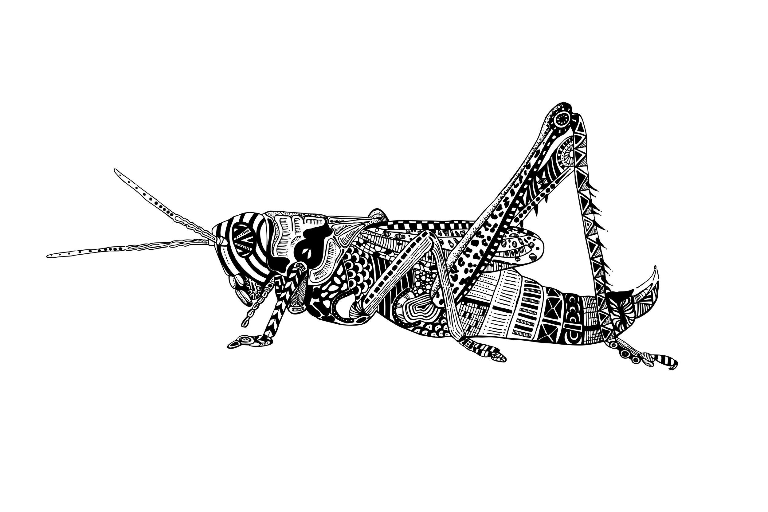 Grasshopper 3-2.jpg