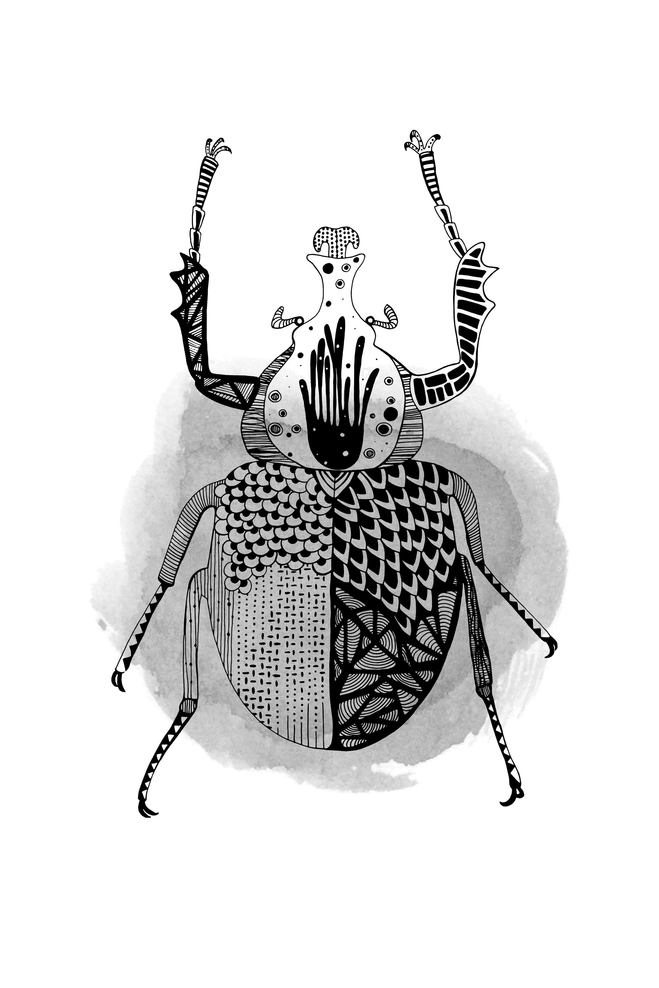 Black Beetle 2-3.jpg